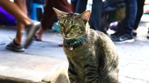 市場の飼い猫